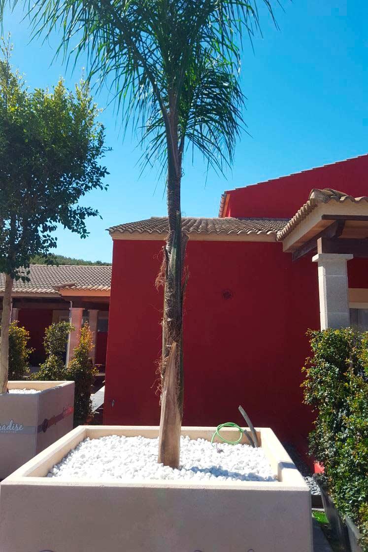 aridos-jardineria-hotel-mallorca-07