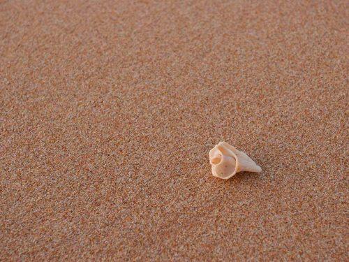 arenal-de-playa-mallorca-01