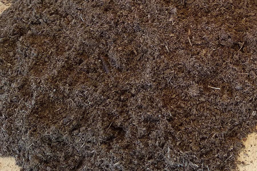 turbia-rubia-mallorca